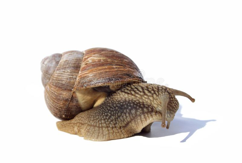 Depressive snail