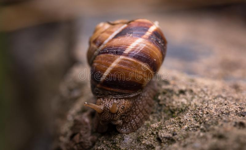 Depth of Field Photography Of Snail stock image