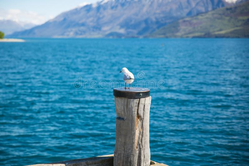 Depth of Field Photography of White Gull on Top of Brown Wooden Pole in Front of Body of Water royalty free stock image