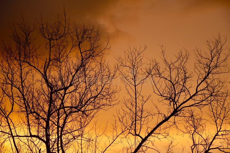 Der Abendhimmel lizenzfreie stockfotografie