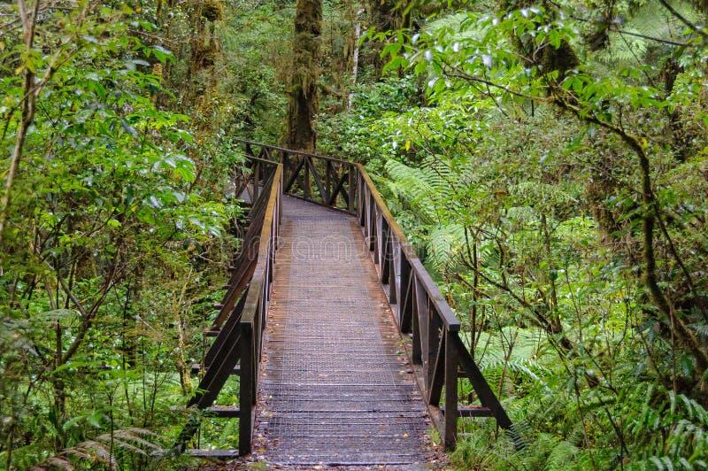 Der Abgrund-Weg - Nationalpark Fiordland stockbild
