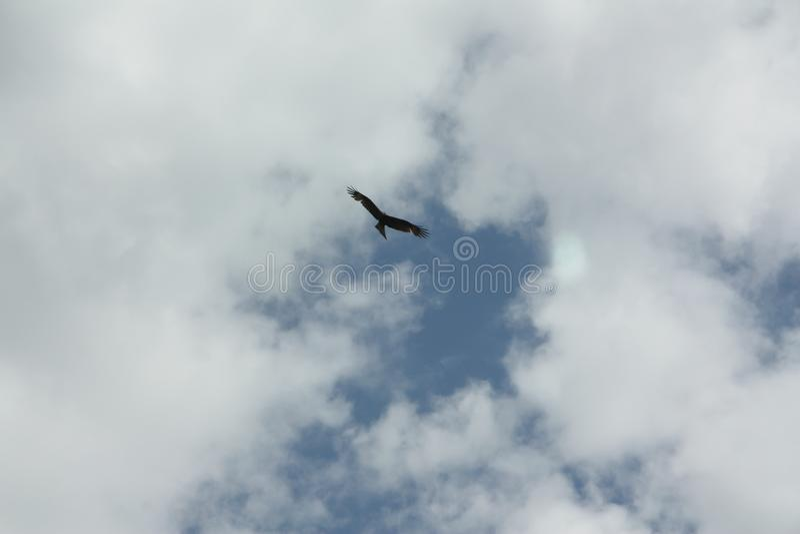 Der Adler im Himmel stockfotos