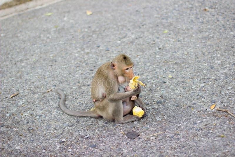 Download Der Affe Isst Banane Und Babyaffe Ist Trinkmilch Stockbild - Bild von essen, breastfeeding: 90232563