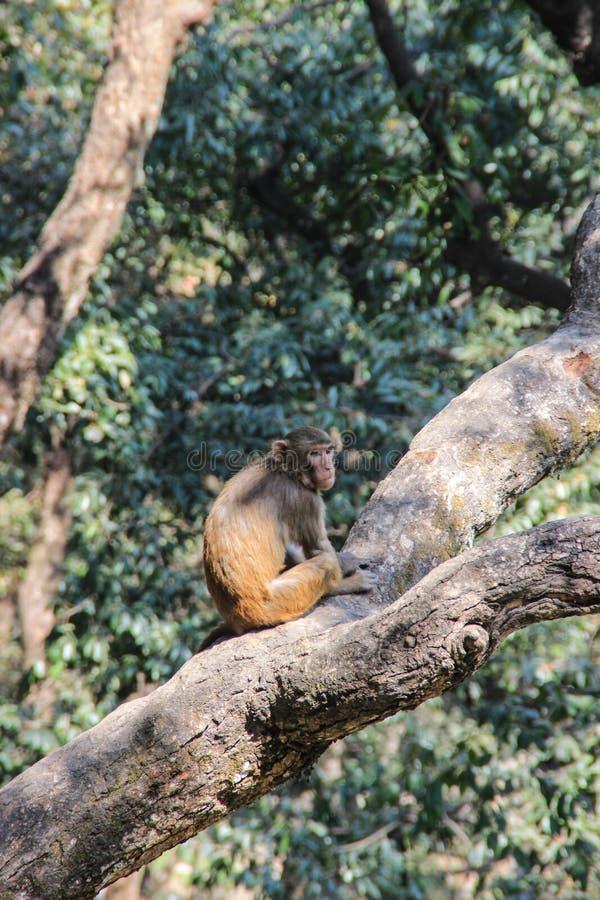 Der Affe sitzt auf einem Baumast stockbilder