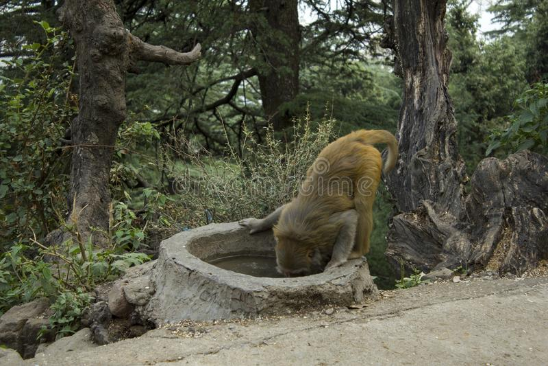 Der Affe an der Wasserentnahmestelle lizenzfreie stockbilder