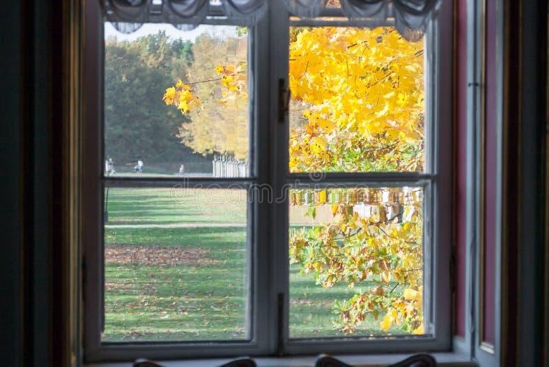 Der alte Ahornbaum hinter dem Fenster in der Herbstsaison stockfotografie
