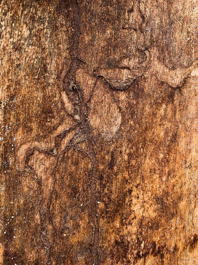 Der alte Baumstamm lizenzfreie stockbilder