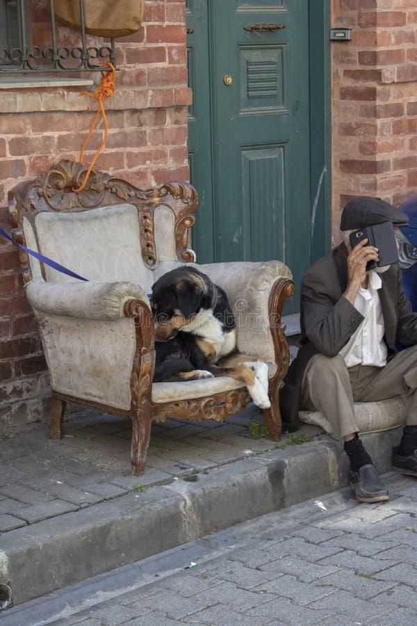 Der alte Mann, der auf der Straße sitzt, spricht telefonisch Nahe bei der Katze sitzt auf dem Lehnsessel lizenzfreie stockbilder
