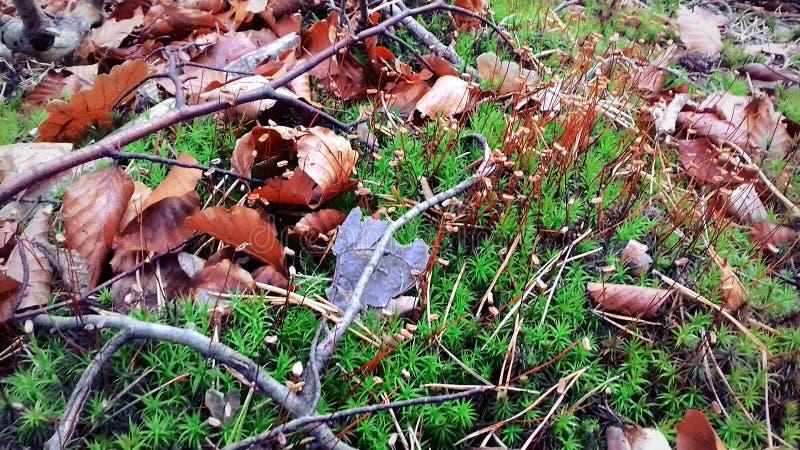 der Anfang des Herbstes Die Blätter sind bereits gefallen Grünes Gras stockfoto