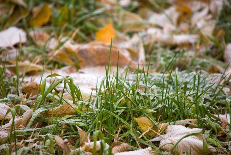 Der Anfang des Winters stockbilder