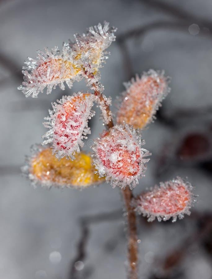 Der Anfang des Winters stockfotografie