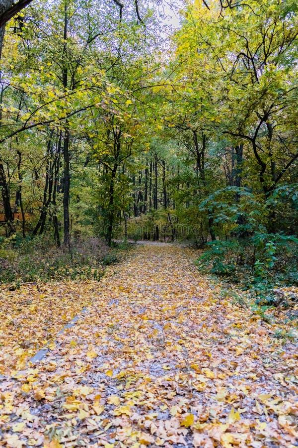 Der Antrieb des Parks im Oktober stockfoto