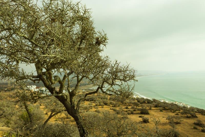 Der Arganbaum in der Höhe des montain stockfotos