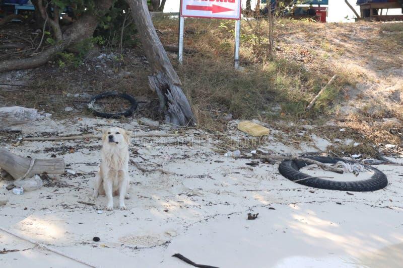 Der arrogante Hund stockfoto