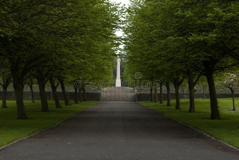 Der Asphaltweg zwischen Bäumen auf den Rasen lizenzfreie stockbilder