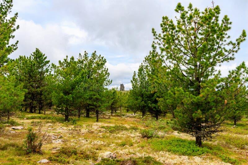 der Außenseiter unter den Zedernwäldern lizenzfreies stockfoto