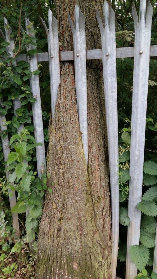 Der Bäume Gewinn immer lizenzfreies stockfoto