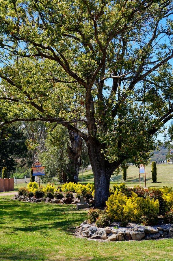 Der Baum stockfotografie