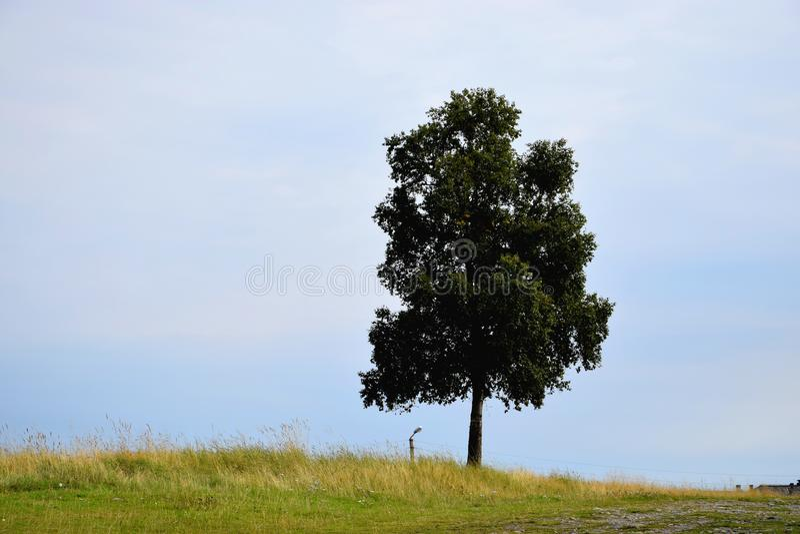 Der Baum lizenzfreie stockfotos