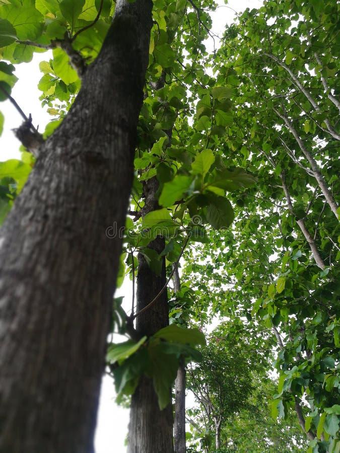 Der Baum lizenzfreies stockfoto