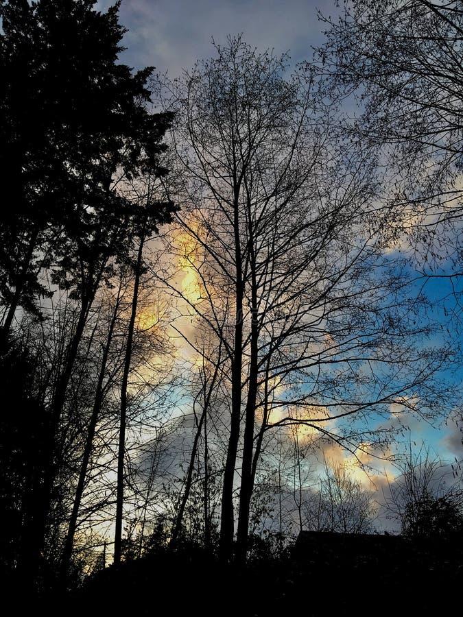 Der Baum lizenzfreies stockbild