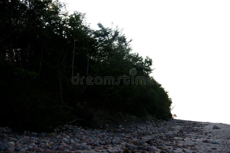 Download Der Baum auf dem Strand stockbild. Bild von braun, sony - 90234813