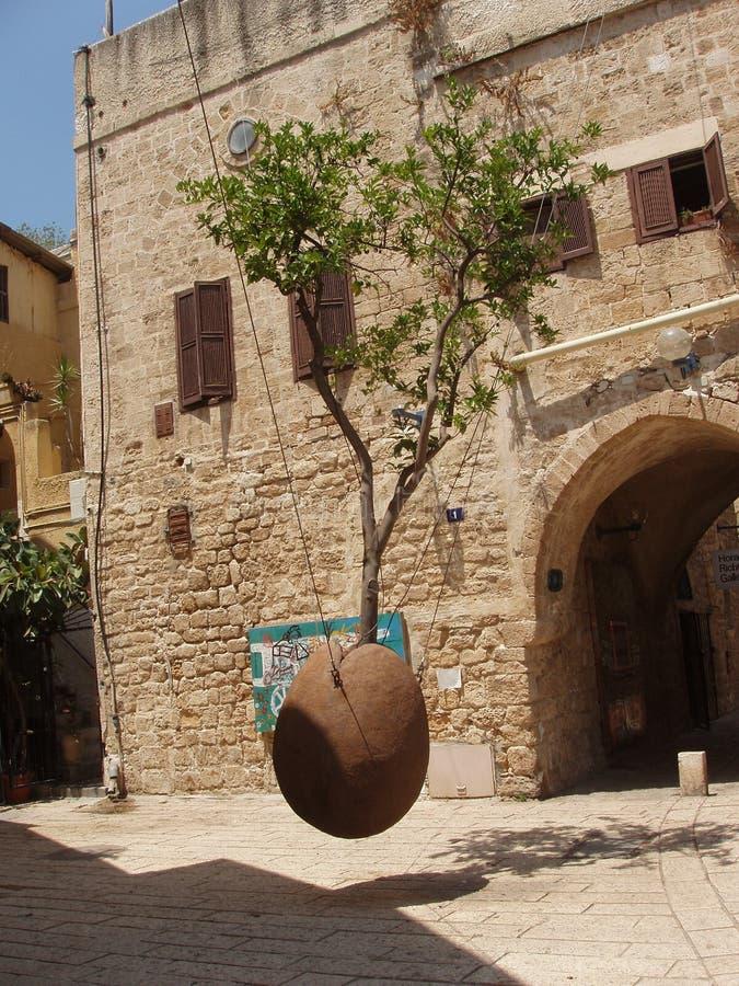 Der Baum in der Luft, alter Jaffa stockfotos