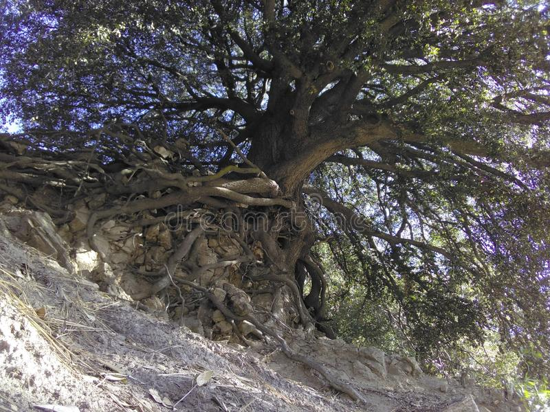 Der Baum des Lebens stockbild