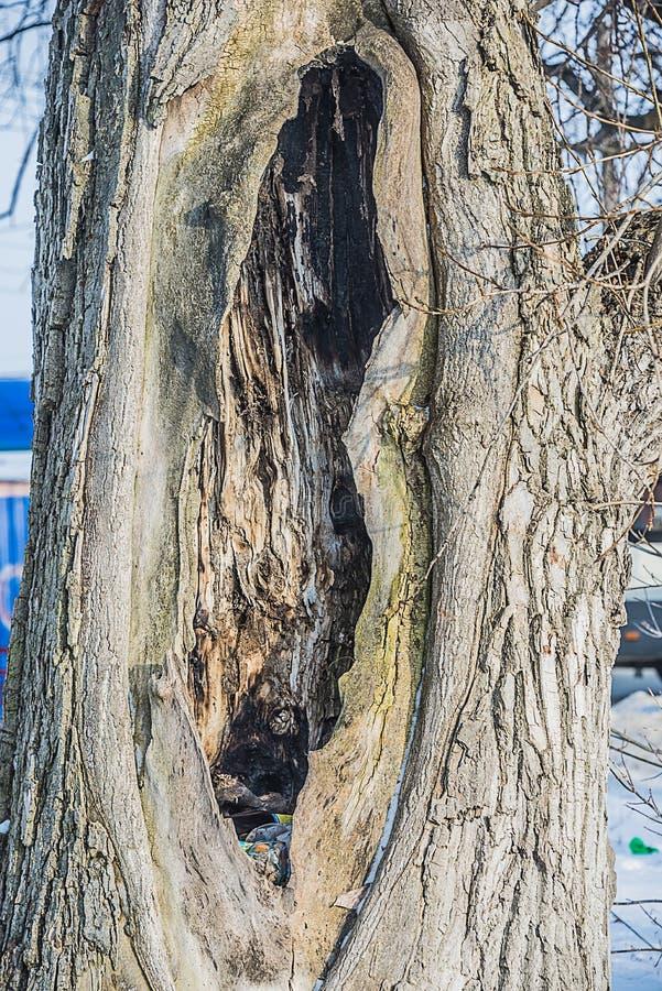 Der Baum in Form von dem weiblichen Körper lizenzfreie stockfotografie