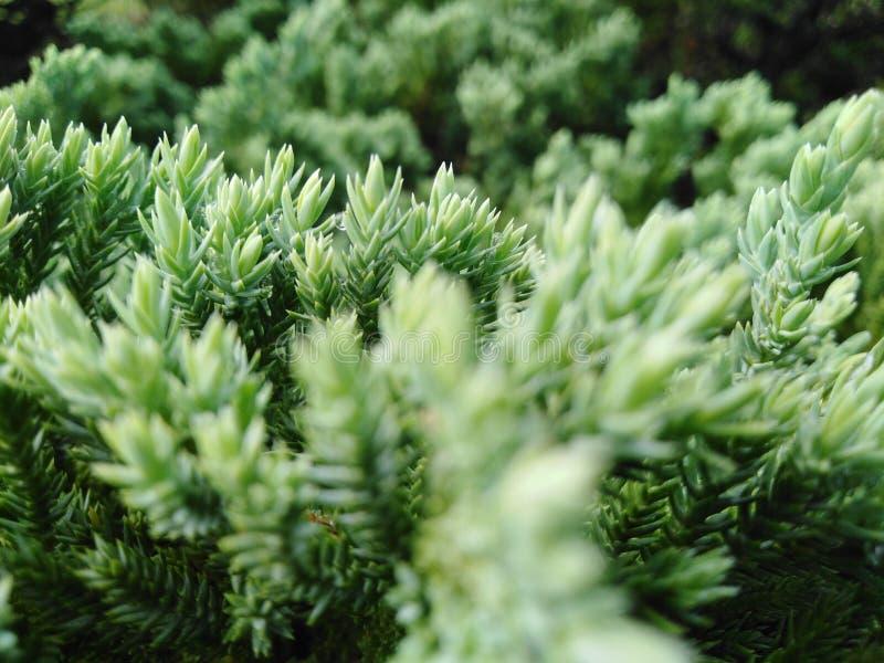Der Baum hat grüne Farbe, der Stamm ist schön und schaut und bequem stockbild