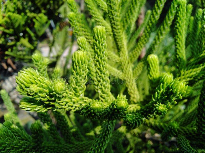 Der Baum hat grüne Farbe, der Stamm ist schön und schaut und bequem lizenzfreie stockbilder
