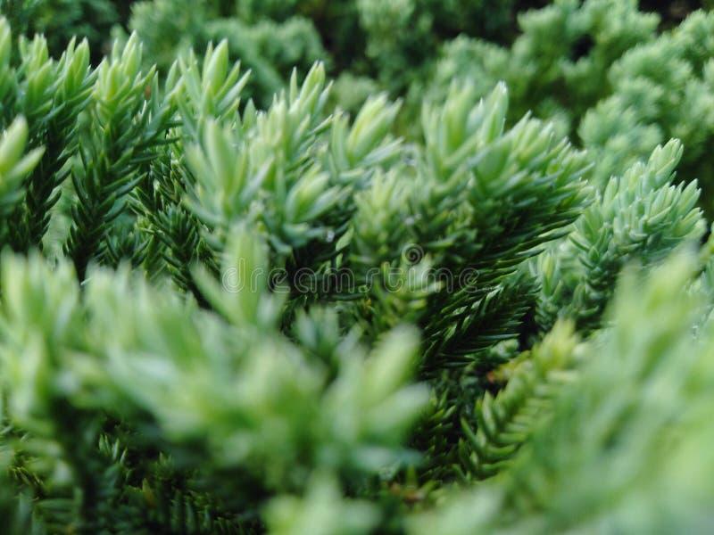 Der Baum hat gr?ne Farbe, der Stamm ist sch?n und schaut und bequem stockfotos