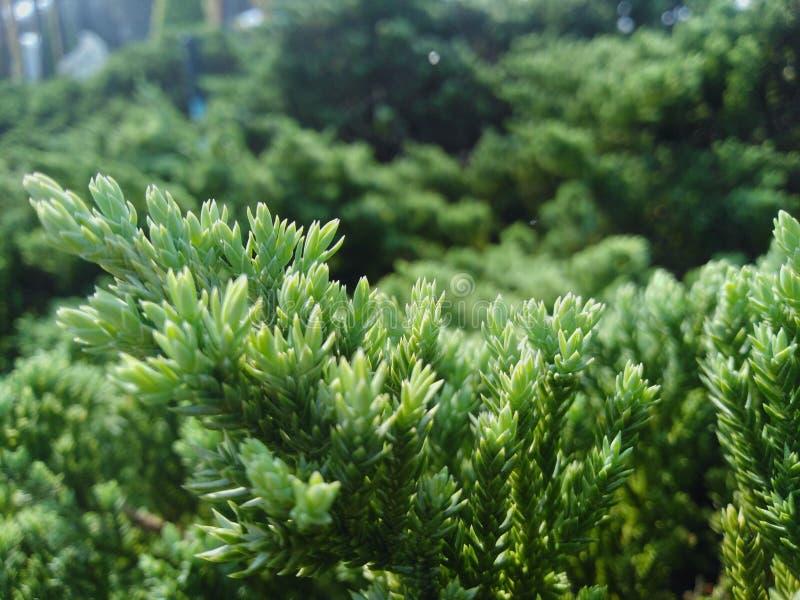 Der Baum hat gr?ne Farbe, der Stamm ist sch?n und schaut und bequem lizenzfreie stockfotos