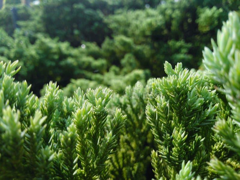 Der Baum hat gr?ne Farbe, der Stamm ist sch?n und schaut und bequem lizenzfreies stockfoto