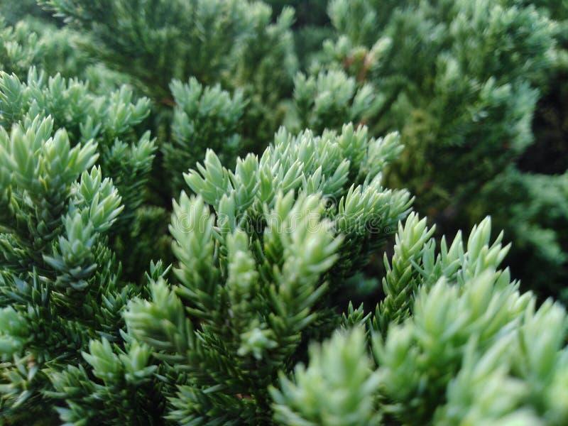 Der Baum hat gr?ne Farbe, der Stamm ist sch?n und schaut und bequem stockbild