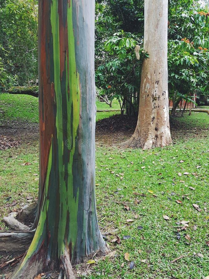 Der Baum im Garten lizenzfreie stockfotos