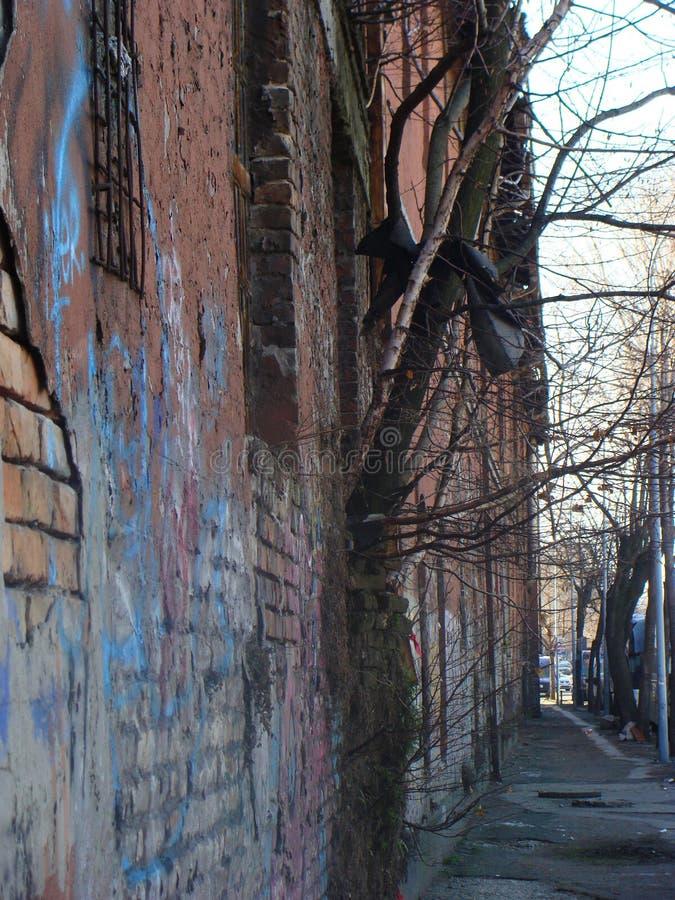 Der Baum von der Wand lizenzfreies stockbild