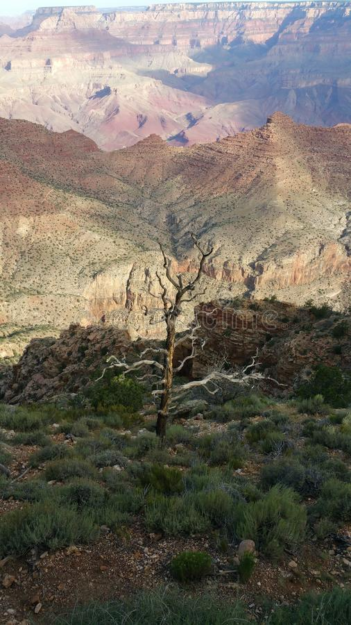 Der Baum vor der Schlucht stockbild