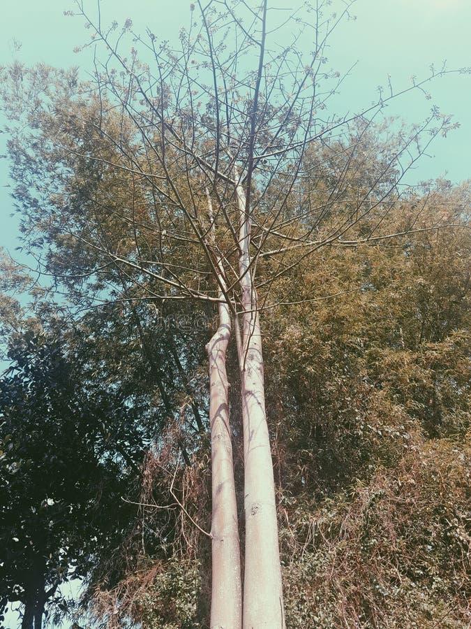 Der Baum wird auf einem weißen Hintergrund getrennt lizenzfreies stockbild