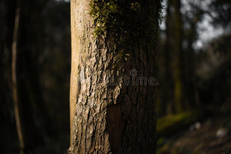 Der Baumstamm wird teilweise mit brauner Barke und Moos bedeckt stockbild