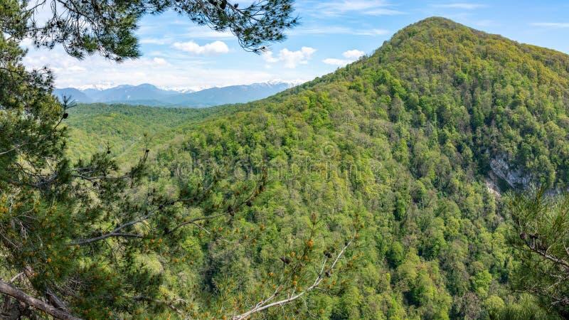 Der Berg, der mit dichtem grünem Waldschnee überwältigt wurde, bedeckte die Berge mit einer Kappe, die auf dem Horizont sichtbar  stockfoto