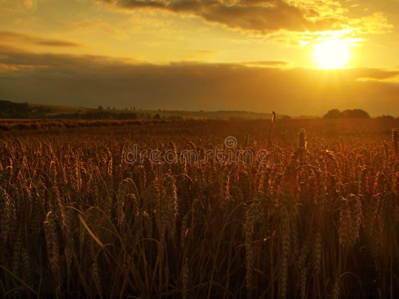 Der bewölkte orange Himmelhintergrund des Sonnenuntergangs Strahlen der untergehenden Sonne auf Horizont in der ländlichen Wiese lizenzfreies stockbild
