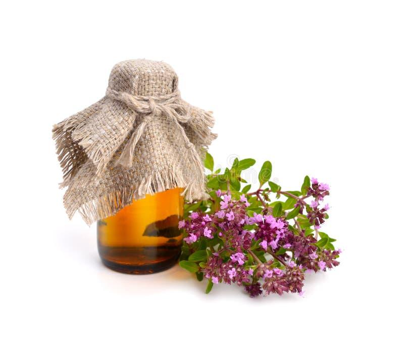 Der blühende Thymian mit ätherischem Öl in der pharmazeutischen Flasche stockbild