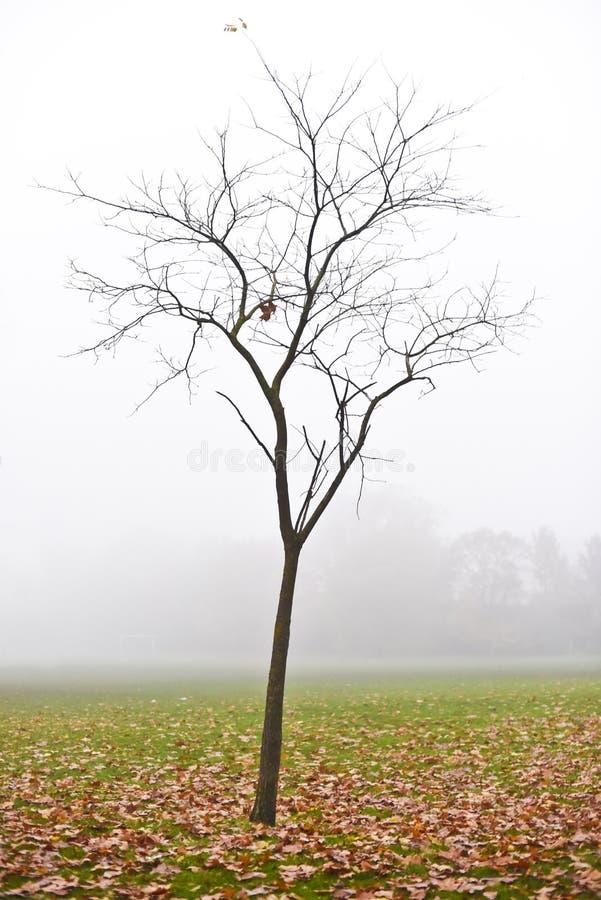 Der bloße Baum mit gefallenen Blättern an einem nebeligen Tag, Dulwich-Park, England stockfoto