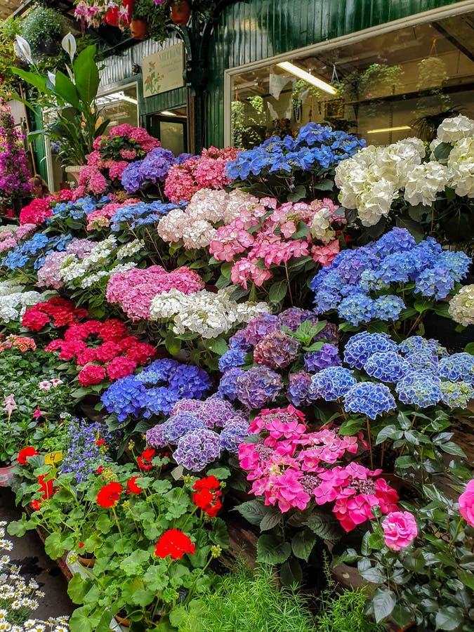 Der Blumenmarkt in Paris fand auf Ile de la Cite, zwischen der Notre-Dame Kathedralen- und Sainte-Chapellekapelle stockfotos