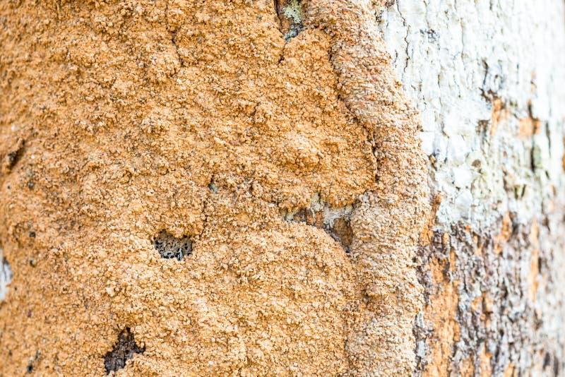Der Boden auf einem Stamm lizenzfreies stockfoto