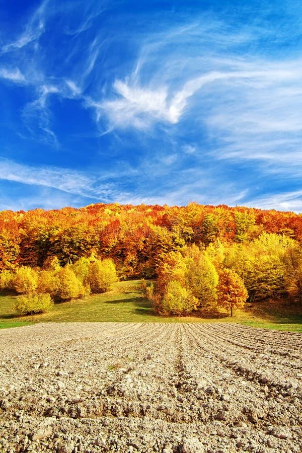 Der Boden wird mit gelben gefallenen Blättern umfaßt lizenzfreies stockfoto