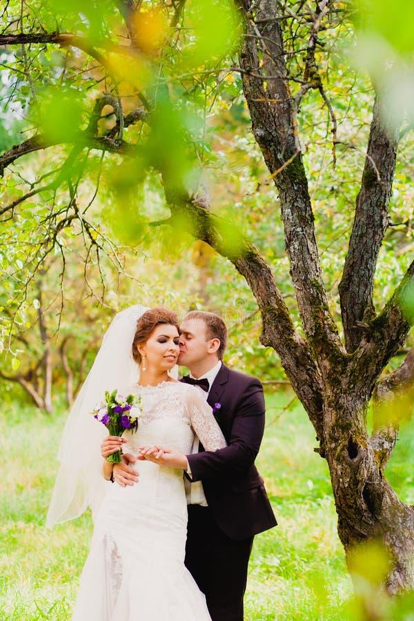Der Bräutigam küsst die Braut in einem Apfelgarten stockbild