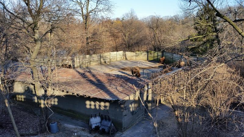 Der Bronx-Zoo-Winter 2015 77 lizenzfreie stockbilder