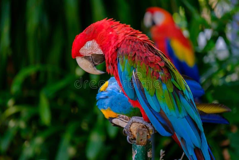 Der bunte Papagei stockbilder